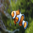 Clownfish - Swim Lessons